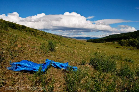A blue khadak finds temporary rest under the eternal blue sky of Mongolia.